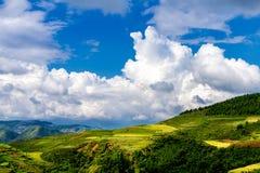 Gouden rijst terrasvormige gebieden bij het oogsten van tijd Royalty-vrije Stock Fotografie