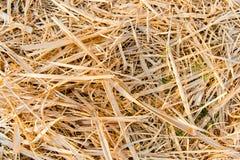 Gouden rijststoppelveld Royalty-vrije Stock Fotografie