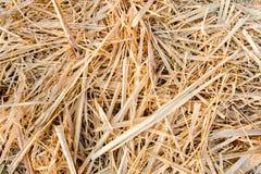 Gouden rijststoppelveld Stock Foto