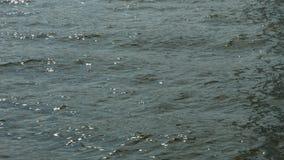 Gouden rimpelingen in water stock videobeelden
