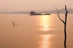 Gouden rivier en gestorven grote boom stock afbeeldingen