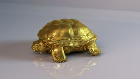 Gouden schildpad Stock Foto