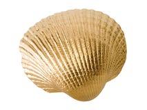 Gouden shell. royalty-vrije stock afbeeldingen