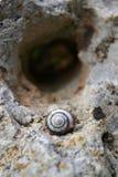Gouden slak in eenzaamheid Stock Foto