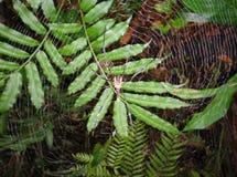 Gouden spin & zijn gouden Web Stock Afbeeldingen