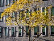 Gouden Stad Stock Foto