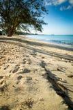 Gouden strand in de keerkringen Royalty-vrije Stock Afbeelding