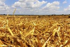 Gouden stro op het gebied op een zonnige de zomerdag Stock Fotografie