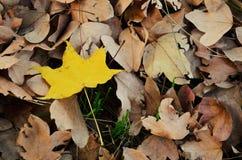 Gouden stuk van de Herfst Stock Afbeeldingen