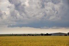 Gouden tarwe op een landbouwbedrijfgebied stock afbeeldingen