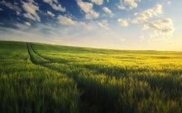 Gouden tarwegebied met weg in de zonsondergangtijd stock foto