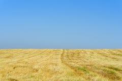 Gouden tarwegebieden na oogst en blauwe hemel in zonnige dag stock afbeeldingen