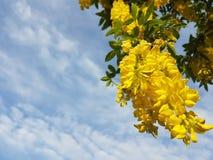 Gouden tegengullregn Royaltyfri Fotografi