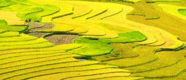 Gouden terrasvormige padievelden met zonlicht in Mu Cang Chai, Vietnam Stock Foto