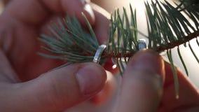 Gouden Trouwringen op pijnboom of sparren macrojuwelen van de close-upspruit diamon stock video