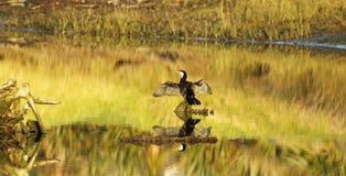 Gouden Uur op het Estuarium Stock Foto's