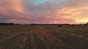 Gouden veelkleurige zonsondergang over een landbouwbedrijfgebied met hooibalen Vliegende hommel over een gemaaid tarwegebied bij  stock footage