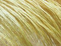 Gouden veer Stock Afbeelding