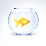 Gouden Vissen in een kom Royalty-vrije Stock Afbeeldingen