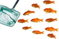 Gouden vissen en netto Stock Fotografie
