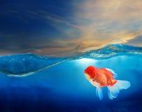 Gouden vissen onder blauw water met mooie dramatische hemel Royalty-vrije Stock Fotografie