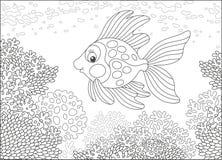 Gouden vissen op een ertsader Royalty-vrije Stock Foto