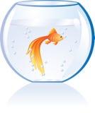 Gouden vissen in water Stock Foto's