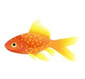 Gouden vissenvector Stock Foto