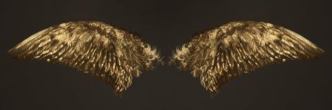 Gouden vleugels Stock Afbeelding