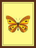 Gouden Vlinder Royalty-vrije Stock Foto