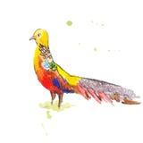 Gouden vogel zoals een haan Stock Fotografie