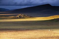 Gouden weide in de zon na de regen stock fotografie