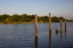 Gouden Weide, Louisiane Stock Foto