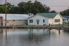 Gouden Weide, Louisiane Stock Fotografie