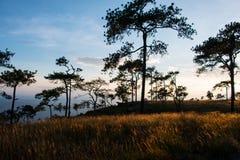 Gouden weiden in de wildernis stock fotografie