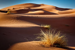 Gouden zand en blauwe hemel Stock Fotografie