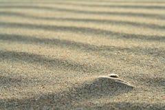 Gouden zand op strand 7 Stock Afbeeldingen