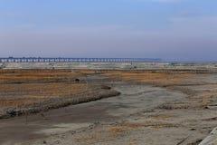 Gouden zeewier, de netten in de getijdevlakte, de dwars-overzeese van de wereld langste brug - de brug van de hangzhoubaai Stock Foto