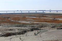 Gouden zeewier, de netten in de getijdevlakte, de langste brug in de wereld Stock Foto