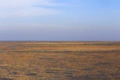 Gouden zeewier, de netten in de getijdevlakte, moerasland in de winter Royalty-vrije Stock Foto's