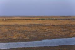 Gouden zeewier, de netten in de getijdevlakte, moerasland in de winter Royalty-vrije Stock Fotografie