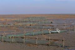 Gouden zeewier, de netten in de getijdevlakte, moerasland in de winter Royalty-vrije Stock Afbeeldingen