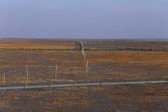 Gouden zeewier, de netten in de getijdevlakte, moerasland in de winter Royalty-vrije Stock Foto