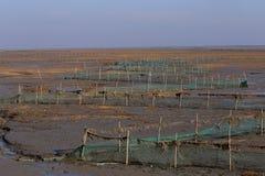 Gouden zeewier, de netten in de getijdevlakte, moerasland in de winter Royalty-vrije Stock Afbeelding