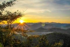 Gouden Zon door Bos Royalty-vrije Stock Foto's