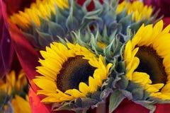 Gouden zonnebloemen en geweven bladeren Stock Foto