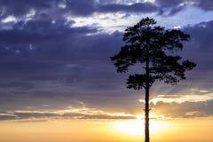 Gouden zonsondergang en boom vooraan Royalty-vrije Stock Foto