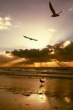 Gouden zonsondergangkleuren stock afbeelding