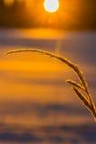 Gouden zonsopgang stock afbeeldingen