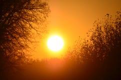 Gouden zonsopgang Stock Fotografie